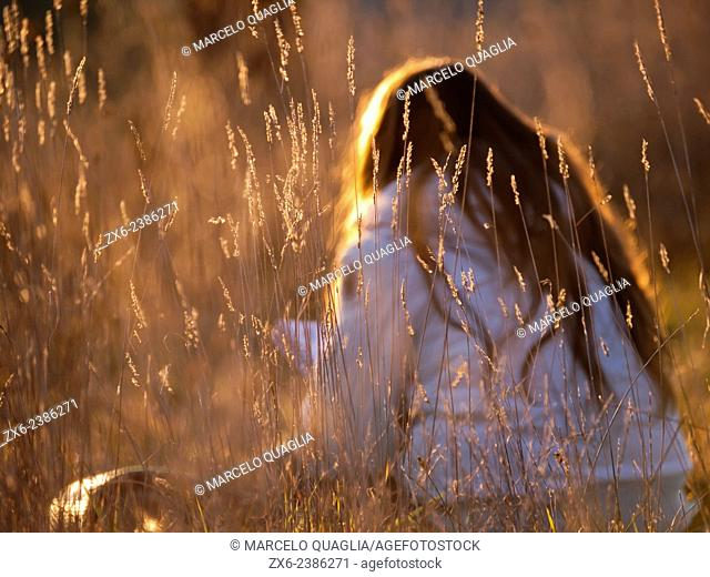 Young woman reading at the field surrounded by tall winter grass sprigs before sunset. Prat de Lluçanes countryside. Osona region