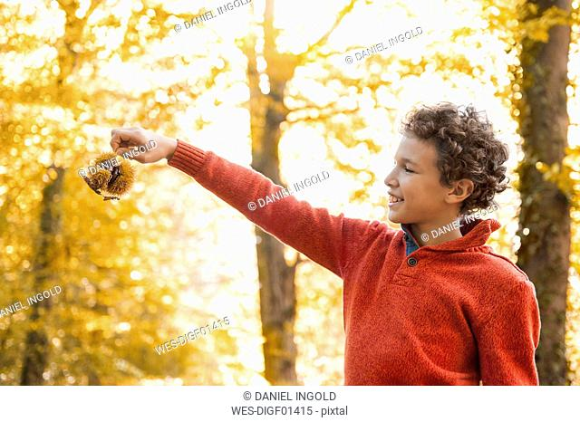 Smiling boy with sweet chestnut in the autumnal forest
