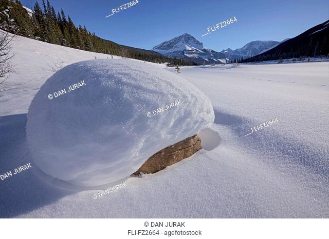Snow-covered boulder in winter, on frozen Sunwapta River, Jasper National Park, Alberta