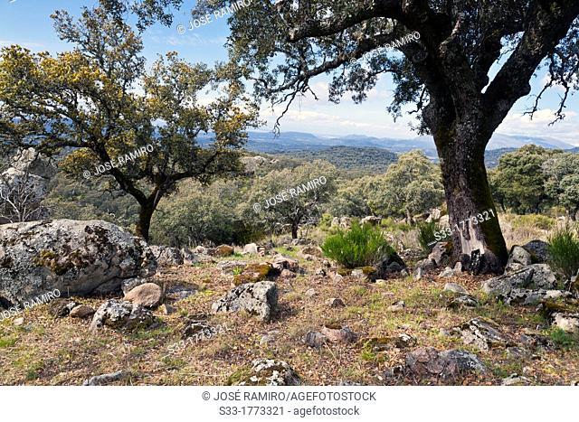 Mingamorena hill in Pelahustán  Toledo  Castilla la Mancha  Spain