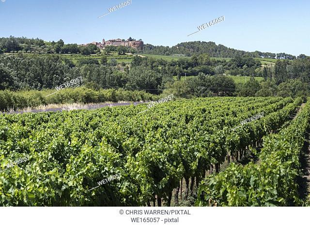 Grape Vines Roussillon Apt Vaucluse Provence-Alpes-Côte d'Azur France