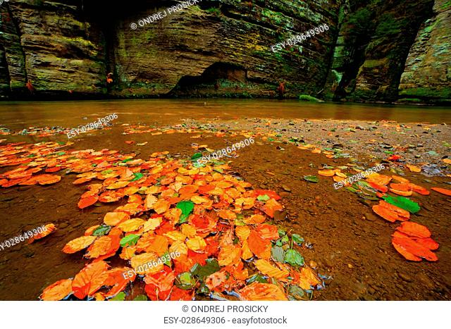 Autumn landscape with orange and yellow leaves in the water