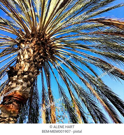 Low angle view of palm tree under blue sky