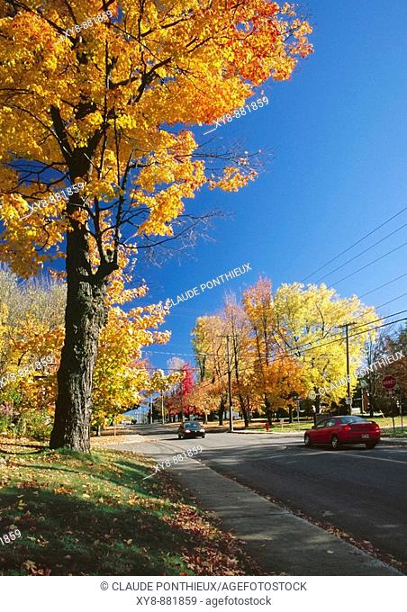 Street-Cars-Trees