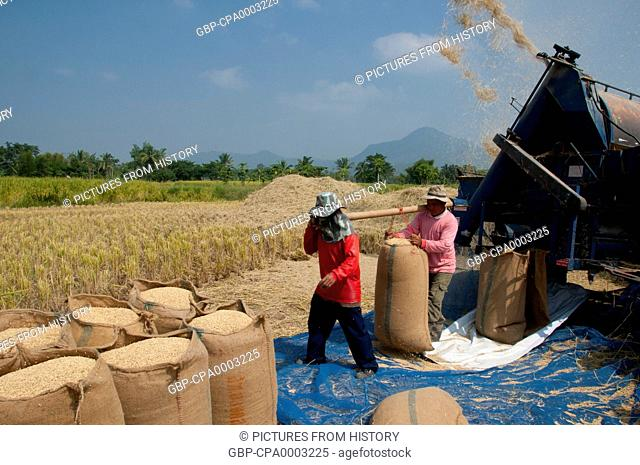 Thailand: A modern threshing machine and its Tai Dam (Black Tai) crew work the ricefields near Ban Na Pa Nat Tai Dam Cultural Village, Loei Province
