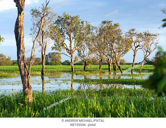 Flooded wetlands during the wet season, Kakadu National park, Northern territory, Australia