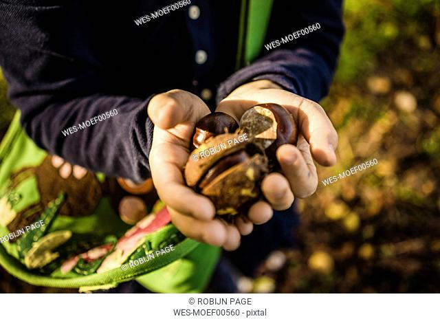 Close-up of girl collecting chestnuts in autumn forest