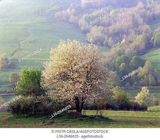 Spring in Bieszczady Mountains. Poland
