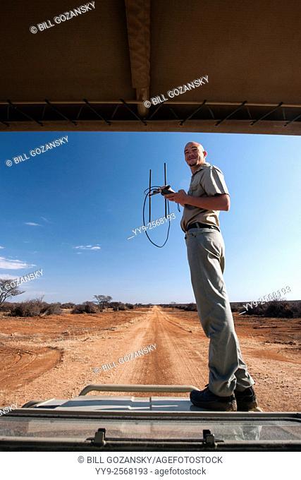 Guide using radio telemetry to track wildlife in Okonjima Nature Reserve, Namibia, Africa