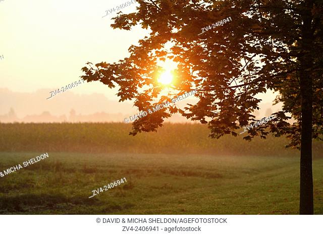 Landscape of a sunrise on a foggy morning in autumn