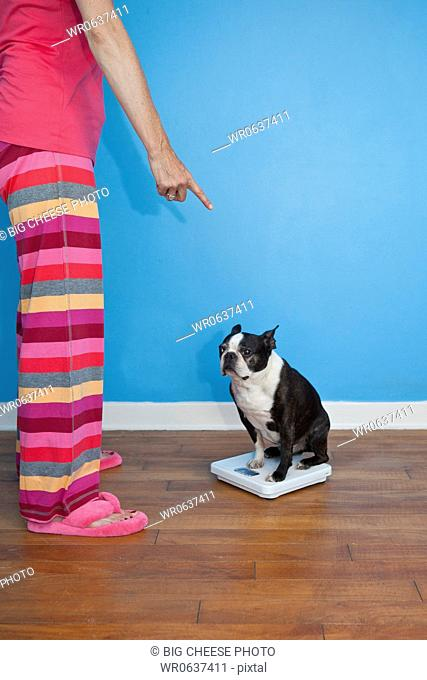 Woman looking at dog sitting on scales