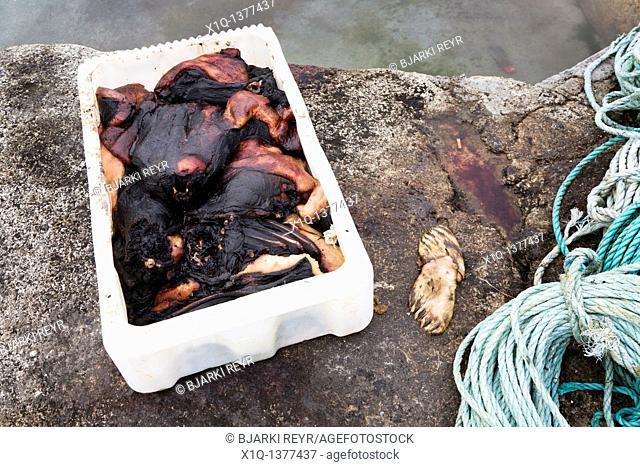 Seal carcasses, Narsaq, South Greenland