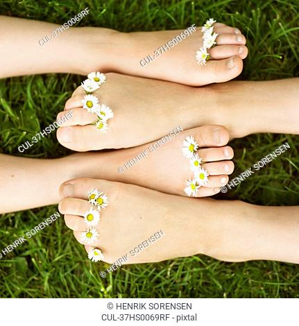Close up of daisies on children's toes