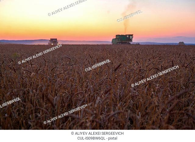 Combine harvester harvesting wheat field at sunset