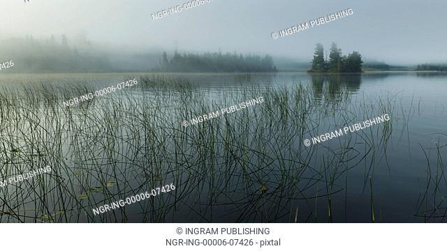 Reeds growing in the lake, Kenora, Lake of The Woods, Ontario, Canada