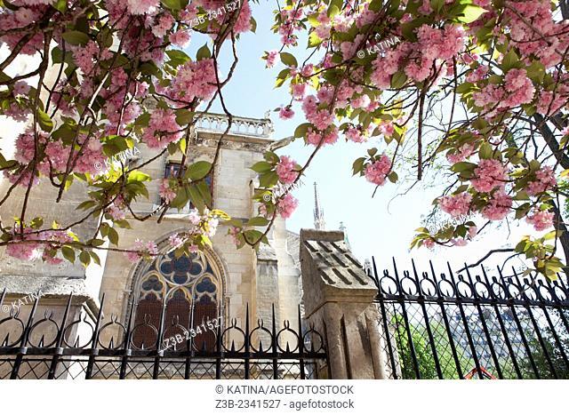 Notre Dame Cathedral seen from Notre Dame Park, Ile de la Cite, Paris, France