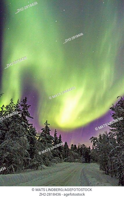 Northern light, Aurora borealis, over forest and a winter road in winter season, plenty of snow hanging on the trees, Gällivare, Swedish Lapland, Sweden