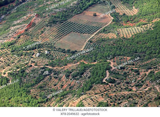 Olive tree fields beneath the mountain of Sainte Victoire, Bouches du Rhône, Provence, 13, PACA, France