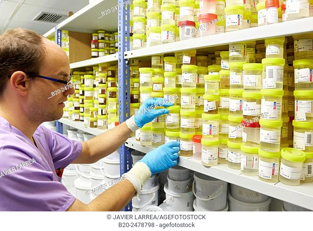 Healthcare worker adjusting samples in storage room in hospital, Anatomic Pathology, Hospital Donostia, San Sebastian, Basque Country, Spain