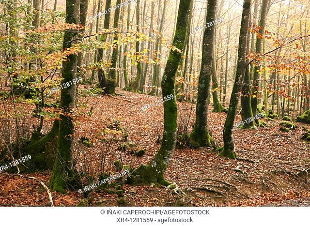 Autumn in the Valley Baztan, Baztan Valley, Elizondo, Navarra Nafarroa, Spain España