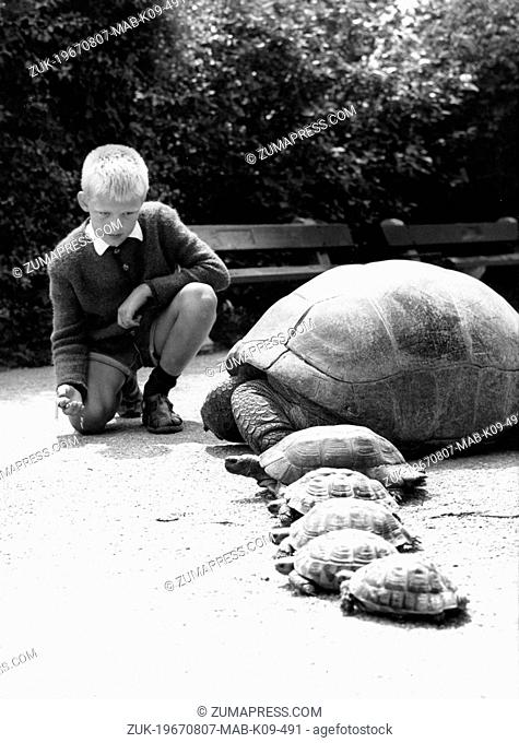 Aug. 7, 1967 - Muenchen, Germany - Turtle running contest at the petpark in Muenchen. PICTURED: Young boy, Karl Heinz with the contenders ready to go and get...