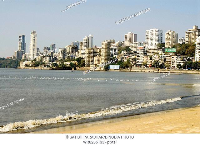 View of buildings and Arabian sea with seagulls on water , Bombay Mumbai , Maharashtra , India