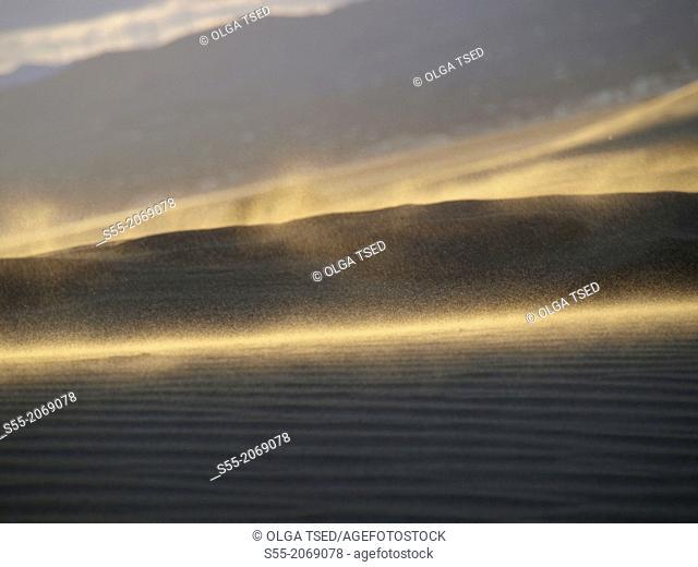 Sand in motion. Delta del Ebro, punta del Fangar,Catalonia, Spain