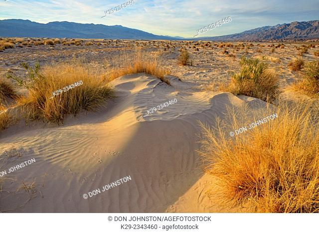 Mesquite Sand dunes- hardpan mud tiles with desert vegetation, Death Valley National Park, California, USA