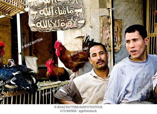 fresh chickens sold in the vibrant Cairo markets