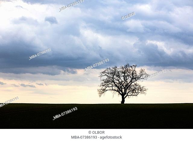 single tree oak at the horizon with clouds