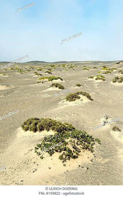 Sand dunes with sparse vegetation, Skeleton Coast National Park, Namibia