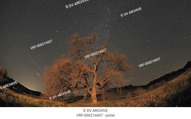 Night time lapse of star trails, clouds and Valley Oak Tree during a new moon in Oak View, California