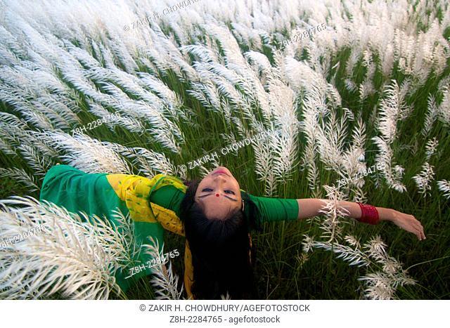 catkin flower grove. Bangladesh