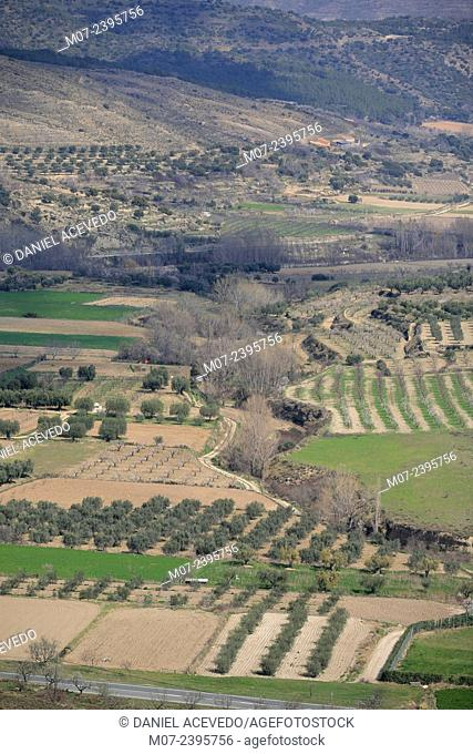 Cornago orchards, Linares valley, Biosphere reserve, La Rioja baja region, Spain, Europe