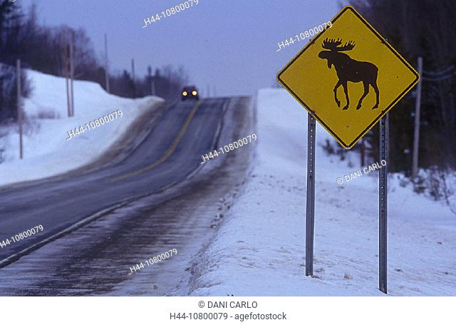 Abitibi, animal, animals, board, Canada, North America, America, watch out elks, elk, moose, mooses, Province of Que
