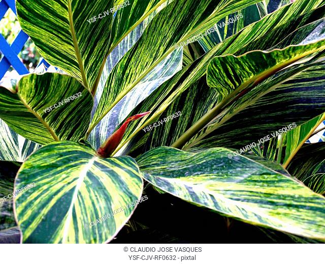 Nature, plants, leaf, green leaf and yellow plant, Botanical Garden, City, Rio de Janeiro, Brazil