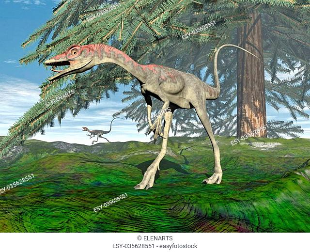 Compsognathus dinosaur walking on the grass under fir tree by day - 3D render