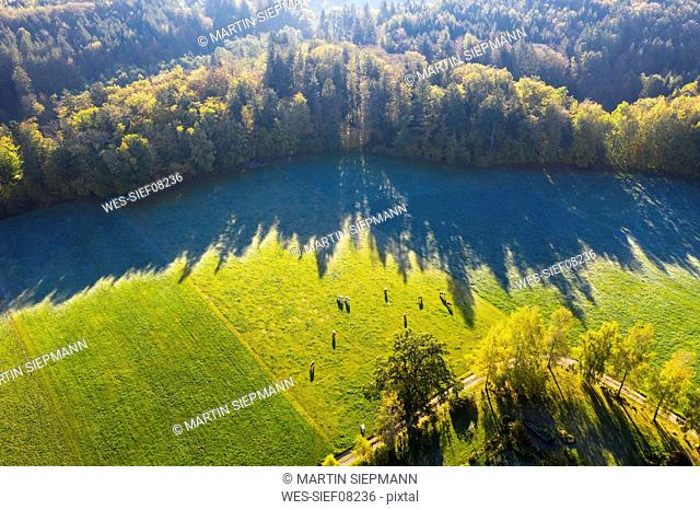 Germany, Upper Bavaria, Aerial view of cows on pasture at autumn morning