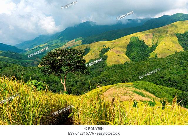 View of the rice field on the mountain in Pua district, Nan province, Thailand