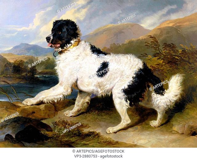 Landseer, Edwin Henry (Sir, RA) - Lion- A Newfoundland Dog