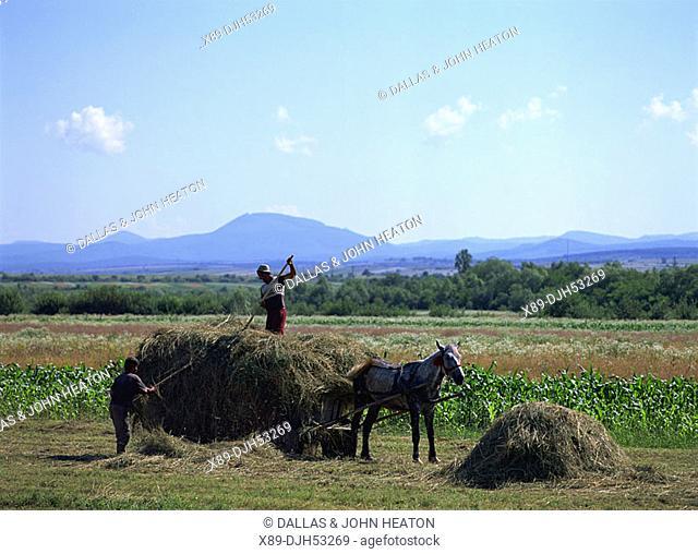 Romania,Transylvania, Rural Scene, Farmers Loading Hay