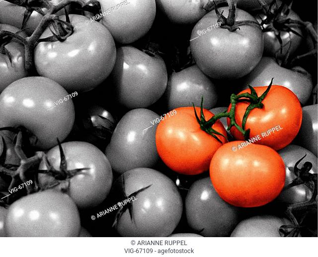 Tomatoes ( coloured ). - 10/08/2003