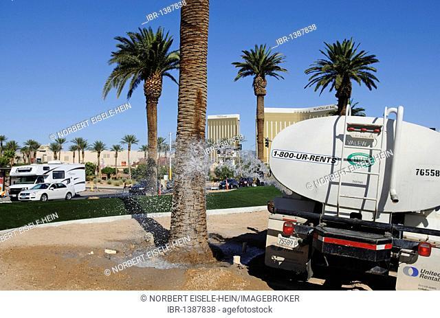 City gardener watering palm trees, Las Vegas, Nevada, USA