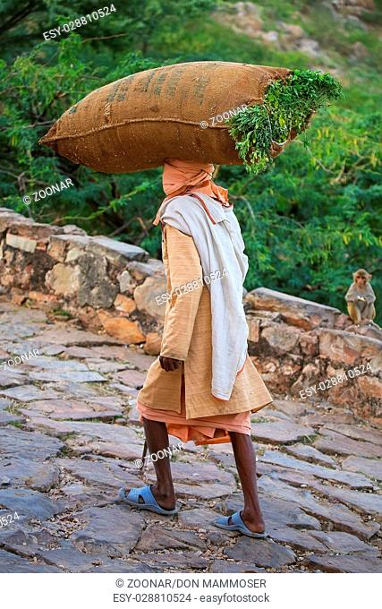 Local man carrying bag with grass on his head near Galta Temple in Jaipur, Rajasthan, India