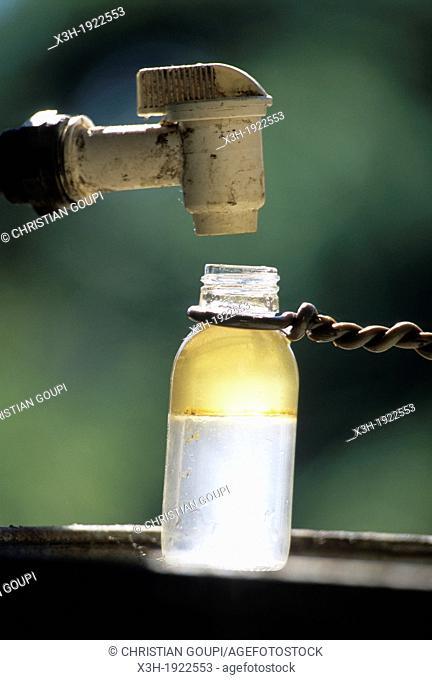 bottle of essence lavender, Drome department, region of Rhone-Alpes, France, Europe