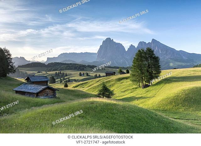 Alpe di Siusi/Seiser Alm, Dolomites, South Tyrol, Italy. Summer landscape on the Alpe di Siusi/Seiser Alm with the peaks of Sassolungo / Langkofel and...