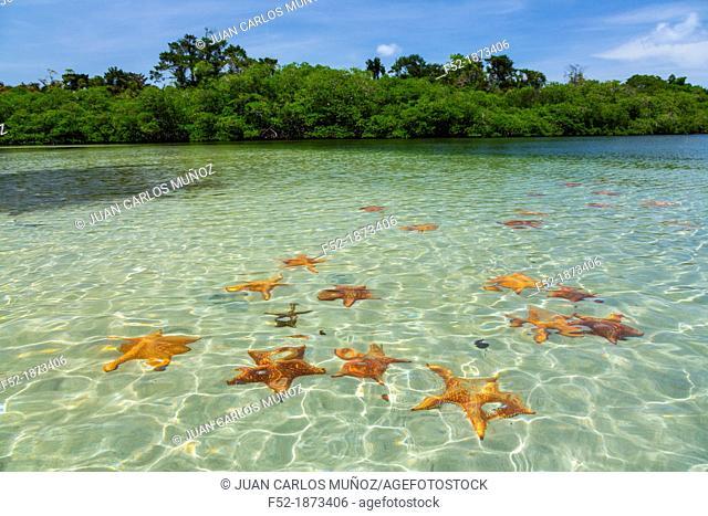 Starfish Beach, Colon Island, Bocas del Toro Archipelago, Bocas del Toro Province, Panama, Central America, America