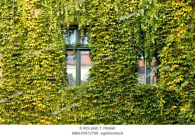 Germany, Berlin, Hackesche Höfe, facade planted with grass
