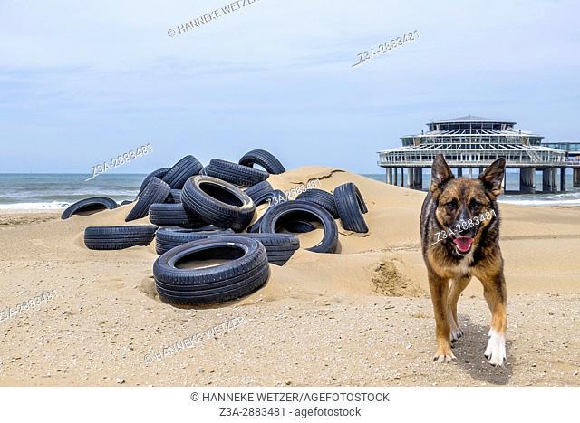 A dog at the beach of Scheveningen, The Hague, The Netherlands, Europe