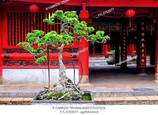 Cam sanh tree in the fifth courtyeard of the Temple of Literature, Hanoi, Vietnam